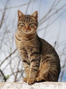 Beautiful cat in the wild
