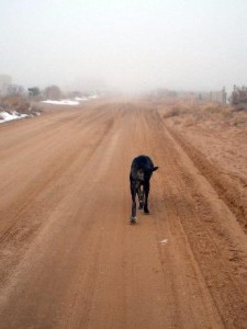 Neo Mastiff walking on dirt road in fog
