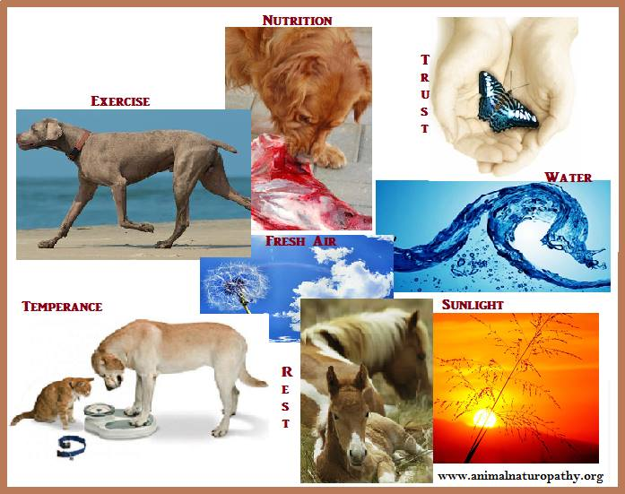 What Is Animal Naturopathy? Original Care for Animals