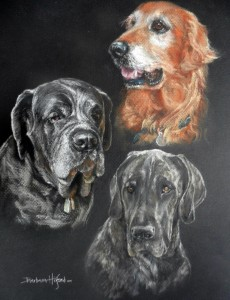 Portrait of Dr Kim's Golden, Mastiff and Dane