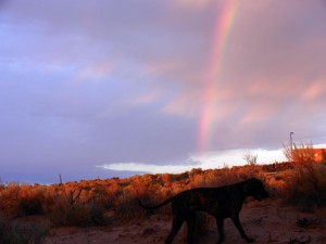 Rainbow over field with Great Dane