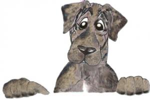 Meshach Puppy