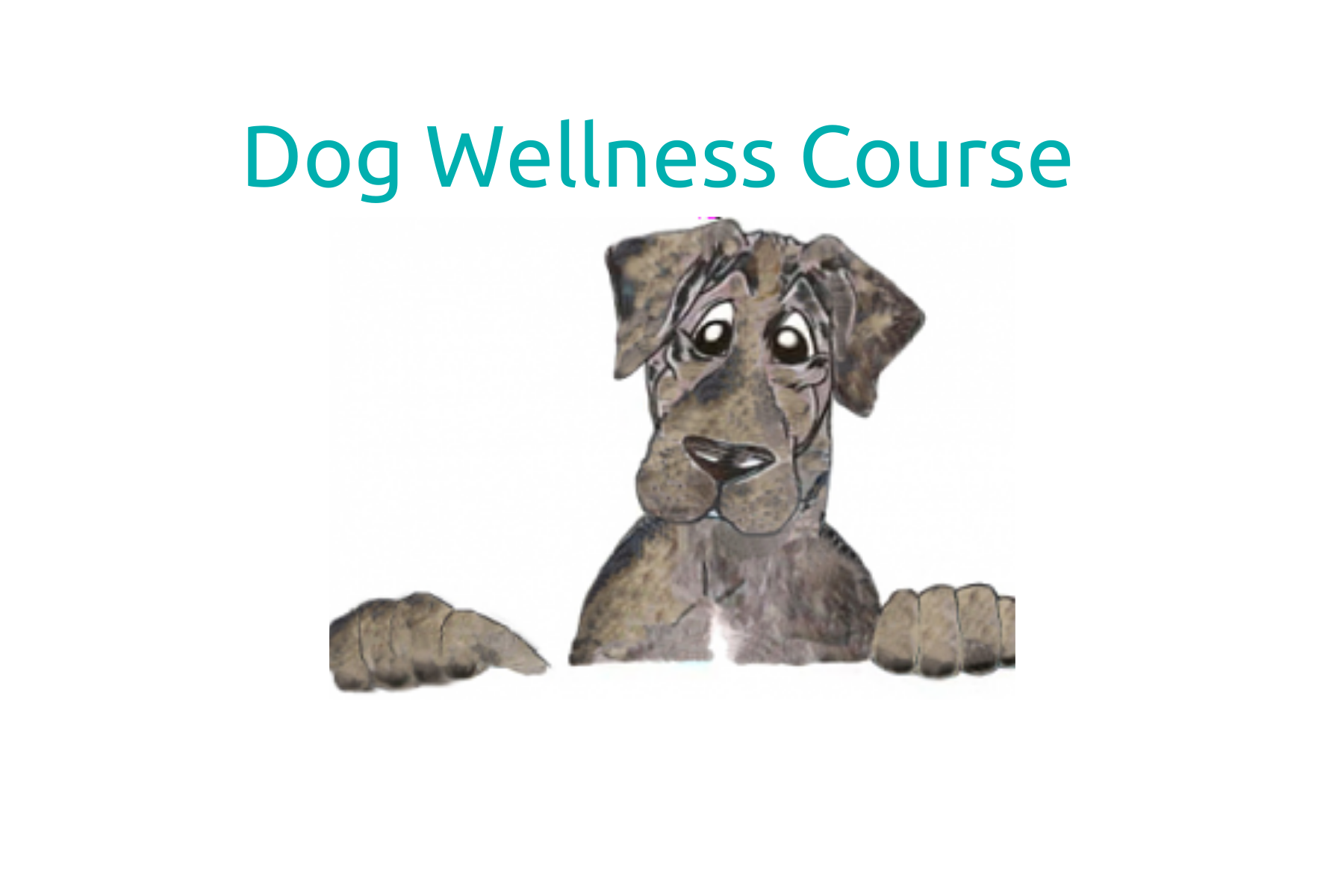 How to Have a Healthy Dog Course
