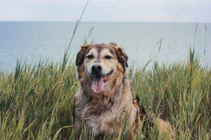 Dog sitting in tall grass