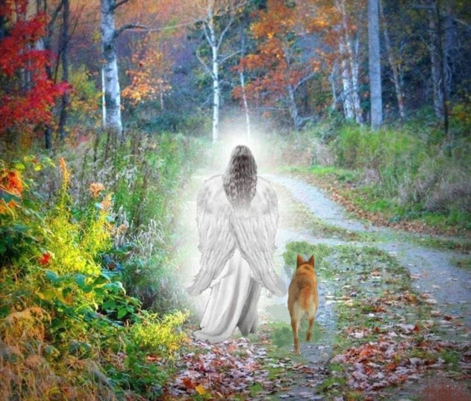 Angel escorting Carolina Dog into eternity