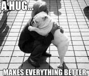 bulldog hugging person