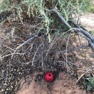 Red Kong ball in desert bush
