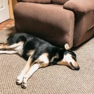 Calming Solutions for Dogs