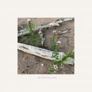 """Desert """"Drift"""" Wood & Weeds"""